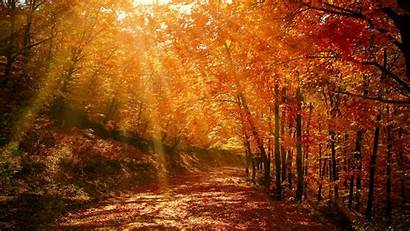 Forest Autumn Park Foliage Sunlight Background Widescreen