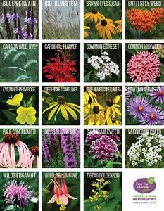 Not, So, Hollow, Farm, -, Perennials, For, Pollinators, Native, Plants, Of, Ontario, Canada
