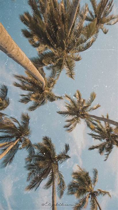 Iphone Aesthetic Wallpapers Palm Tree Trees Uplifting