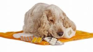 dog dosage of gabapentin