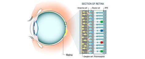 retina surgery  delhi  specialist treatment cost