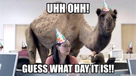 Camel Memes - birthday party meme memes