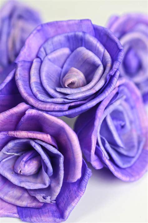 sola flowers purple roses
