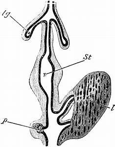 Blank Digestive System Diagram For Kids