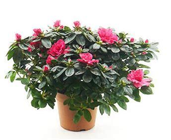 plante fleurie interieur