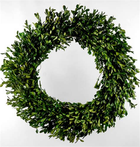 preserved boxwood wreath green