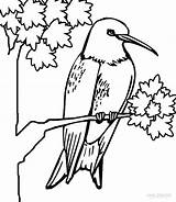 Hummingbird Coloring Pages Printable Hummingbirds Humming Cool2bkids Bird Adult Colors Kerra Books Cartoon sketch template