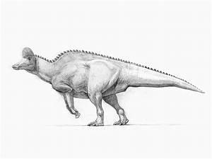 Corythosaurus by pheaston on DeviantArt