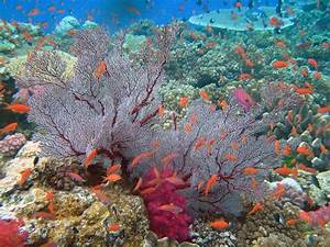 What are the most beautiful coral reefs in the world? - Quora