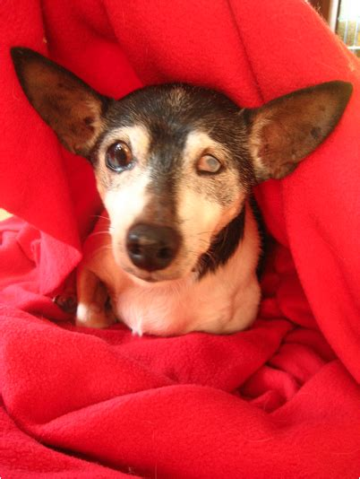 Adoptable Senior Dog Of The Week Von Stickleback