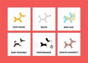 Dog Traits Dna Kit