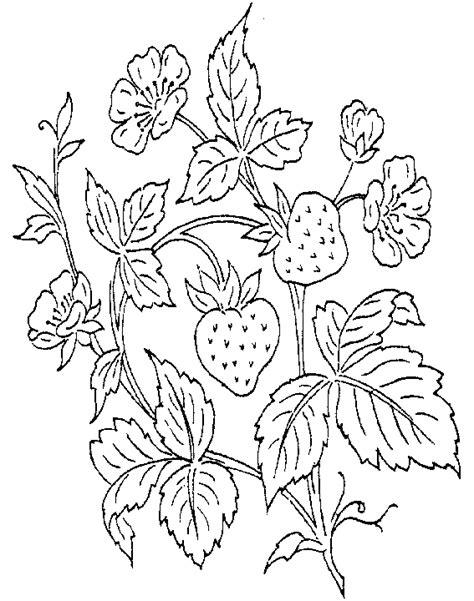 Halve Aardbei Kleurplaat by Eten Kleurplaat 187 Animaatjes Nl
