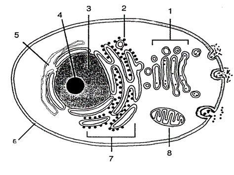 Dibujo de la celula animal con sus nombres para colorear