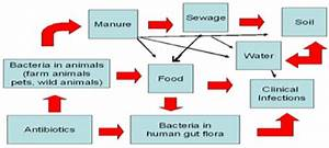 Antibiotic Resistance Flow Chart In Bacteria And The Environment 36