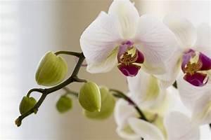 Orchidee Blüht Nicht Mehr : orchidee artist artist als kunstdruck oder handgemaltes ~ Lizthompson.info Haus und Dekorationen