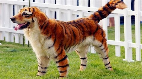 worlds rarest dog breeds  doovi