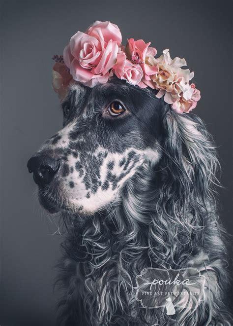 beautiful girl  beautiful english setter   flower
