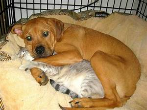 40 Dogs and Cats Who Just Love to Cuddle
