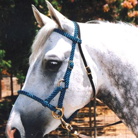 bridle rope halter bitless horse trail horses colors sidepull riding rj options hackamore paracord tack halters pretty bridles visit ropes