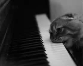 cat piano stop and laugh cat checks piano