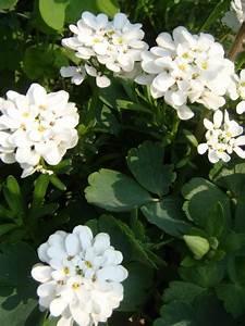 Plantes En Pot Pour Terrasse : mon jardin terrasse quelles plantes pour quelle ~ Dailycaller-alerts.com Idées de Décoration