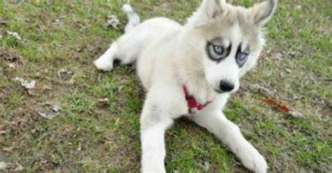 unusual dog breeds  markings    fall
