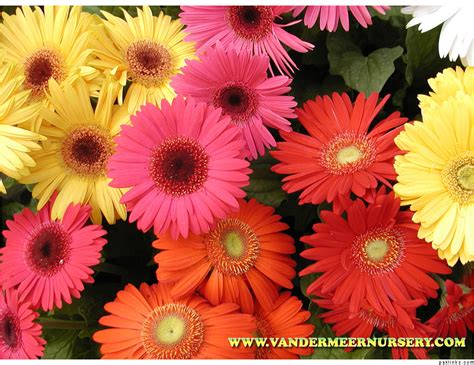 flower kinds with pictures types of flowers in pk
