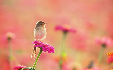 3d home interior design so and lovely small bird on pink flower hd