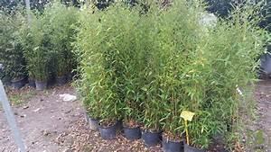 Bambou A Planter : comment planter une haie de bambou fashion designs ~ Premium-room.com Idées de Décoration