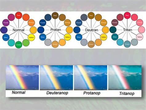 color vision deficiency test color vision deficiency and ishihara s test