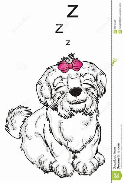 Dog Letters Maltese Bow Sit Sleep Fly