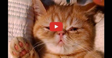 109086 Best ♥ Love Cats Images On Pinterest  Cat Video