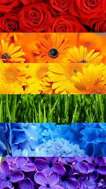Aesthetic Pride Rainbow Iphone Wallpapers Flower Backgrounds