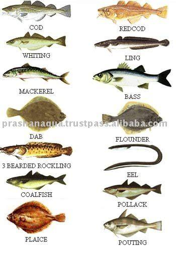 common sea fish productsindia common sea fish supplier