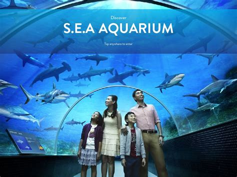 sea aquarium prices buy s e a aquarium admission ticket best price guaranteed sea aquarium sentosa deals for only