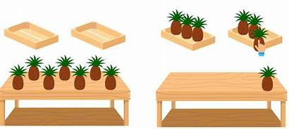 Division Boxes Concepts Basic Numbers Pineapples Between