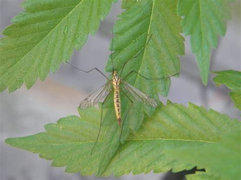 Hemp Hammocks by 16 Best Bugs N Pests That Images On