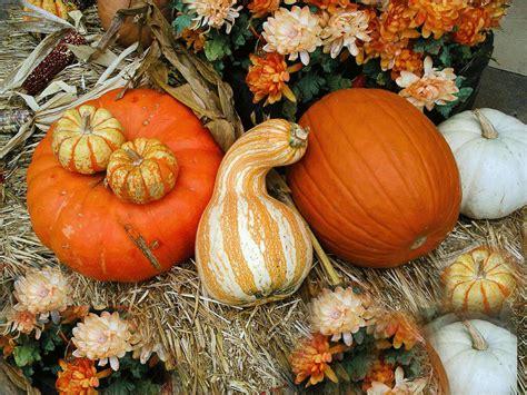 Autumn Pumpkin Wallpaper by 44 Fall Pumpkin Wallpaper And Screensavers On