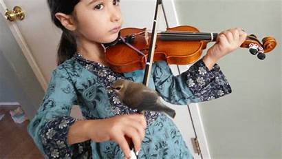Violin Animated Instruments Gifs Playing Play Giphy