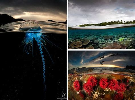 stunning photography simultaneously captures life