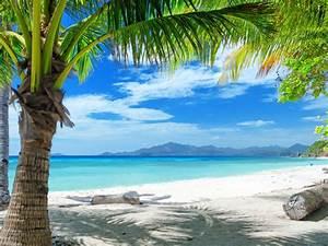 Tropical, Sand, Beach, Palm, Trees, Ocean, Blue, Sky, With, White