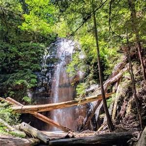 Big Basin Redwoods State Park - 1881 Photos & 573 Reviews ...