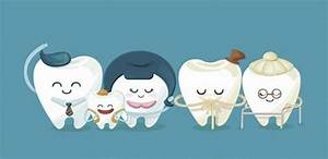 Different Types Of Teeth Guide  Molars  Canine  Incisors