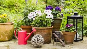 Kübelpflanzen Für Terrasse : so werden k belpflanzen fit f r den fr hling ~ Lizthompson.info Haus und Dekorationen