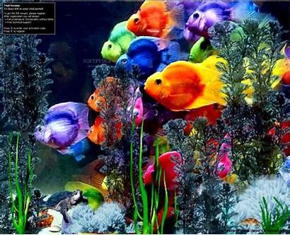 Microsoft Wallpapers Screensavers Screensaver Fish Cave