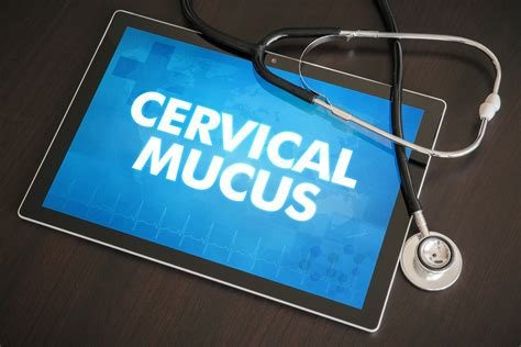 Cervical Mucus During Early Pregnancy The Pulse