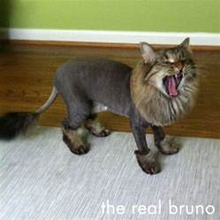 cut for cats bruno with a cut i think that s just a yawn there