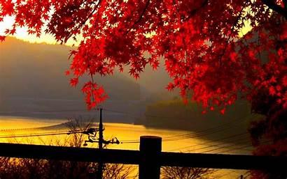 Leaves Autumn Wallpapers Wallpapersafari