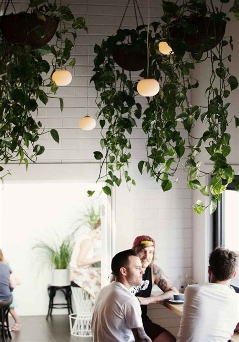 Kitchen Garden Cafe Moseley by 25 Indoor Garden Ideas Mosley S Plants Hanging Plants