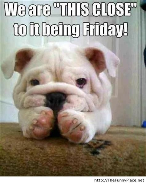 Thursday Funny Memes - almost friday funny quotes quotesgram